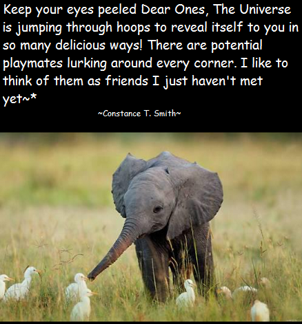 Elephant and Birds